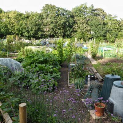 Brownsbrook Allotments - Click to open full size image